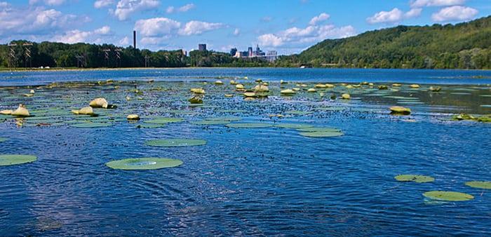 lake-pickerel