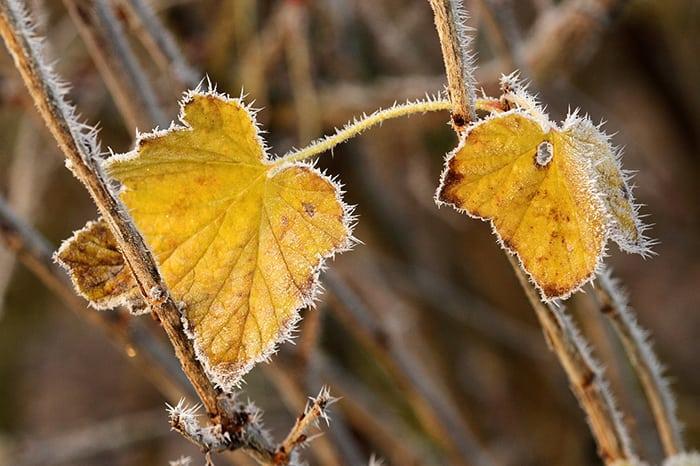 autumn-horefrost